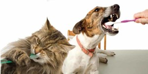 dental-disease-dog-cat